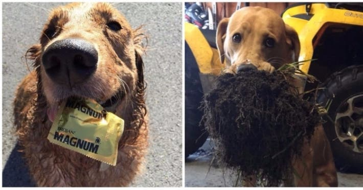 Photo : 20 unbelievably cute pets that turned up with a present for their owner