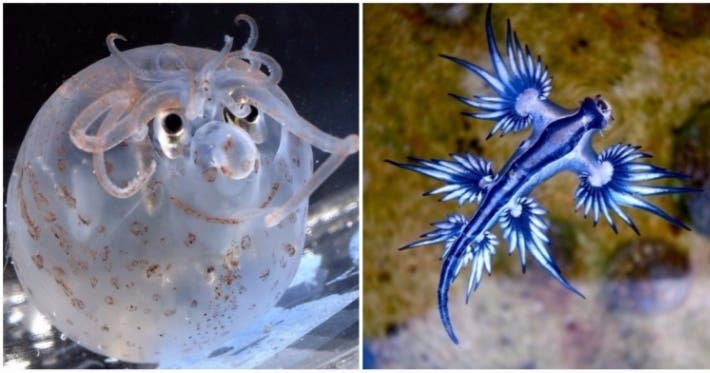 Photo : 13 weird-looking animals that are stranger than fiction