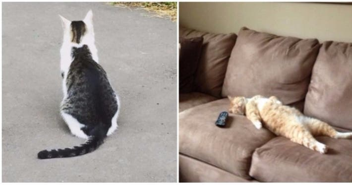 Photo : 22 photos that prove cats really are a law unto themselves